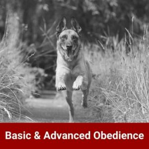 Basic and advanced obedience